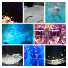 せき 水族館1